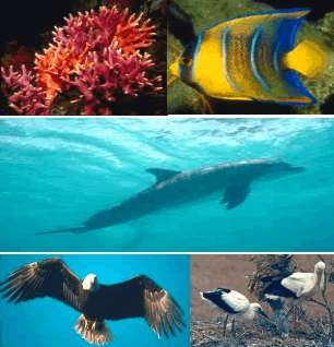 coral, fishes, dolphins and birds